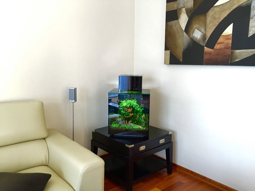 Aquarium Kaiga Wohnzimmer