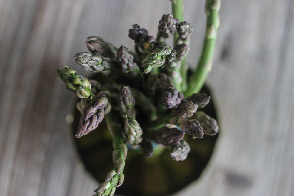 Easter Asparagus with Lemon and Truffle_1
