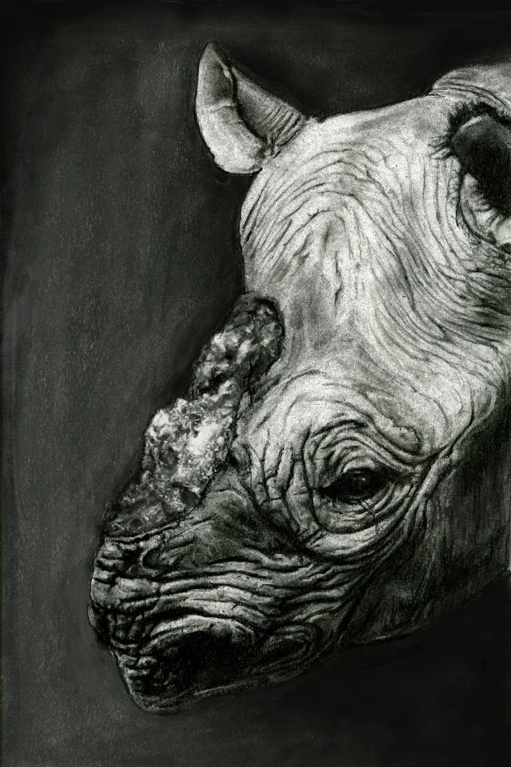 Endangered Species Series-Black Rhino