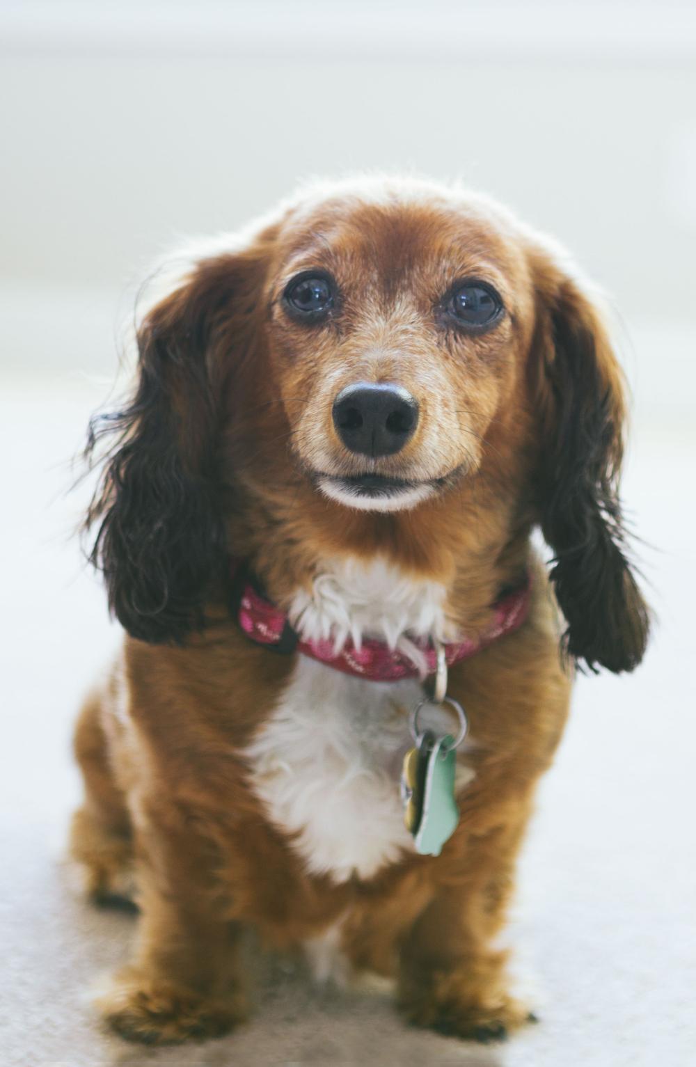 Dog Photo.jpg