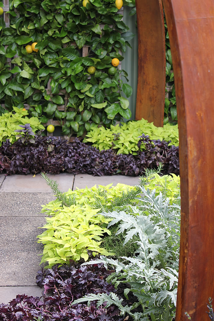 persian inspired garden in melbourne with espalier lemon trees