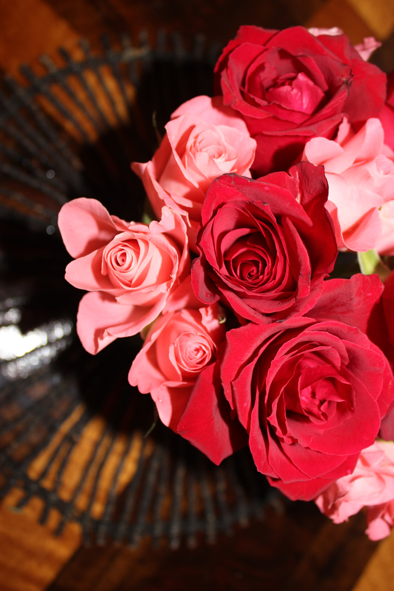 pink and dark red roses