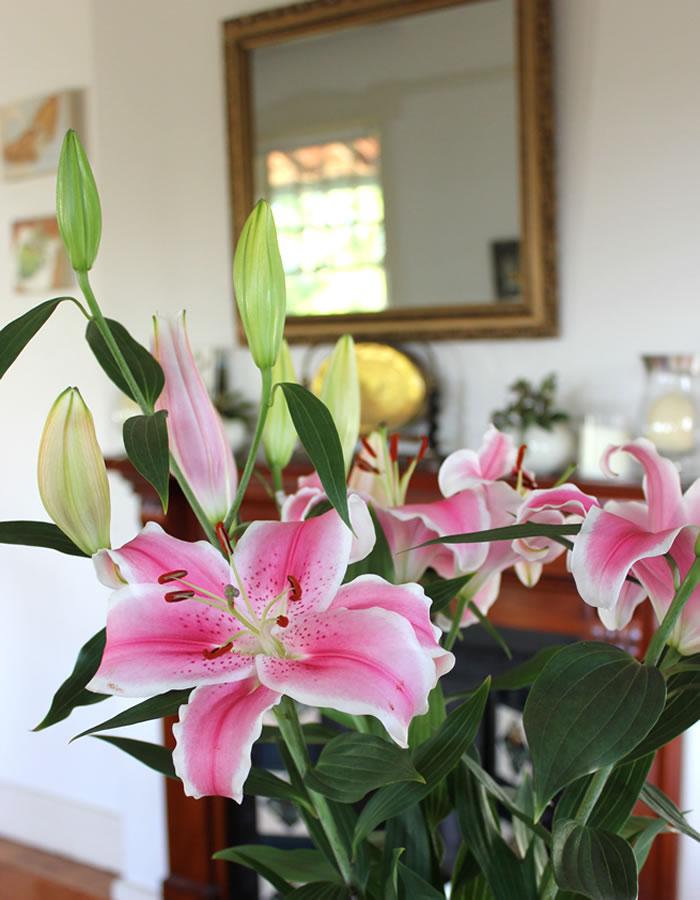 oriental lillies pink