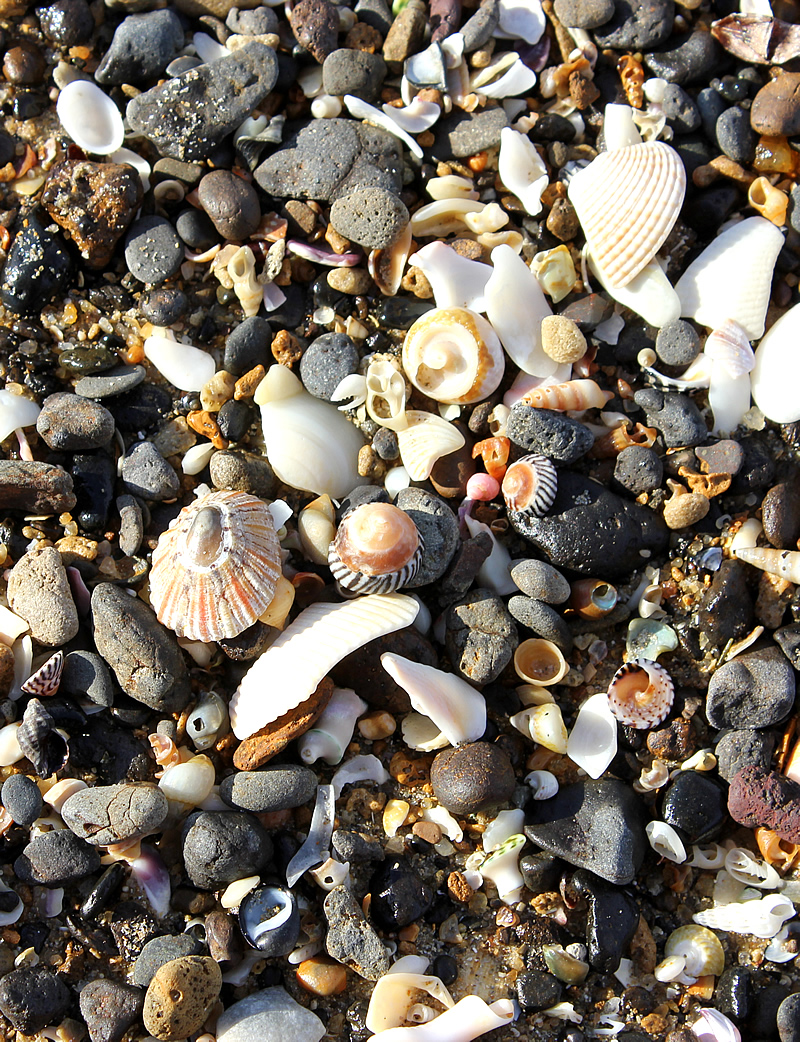 shells on the beach.jpg