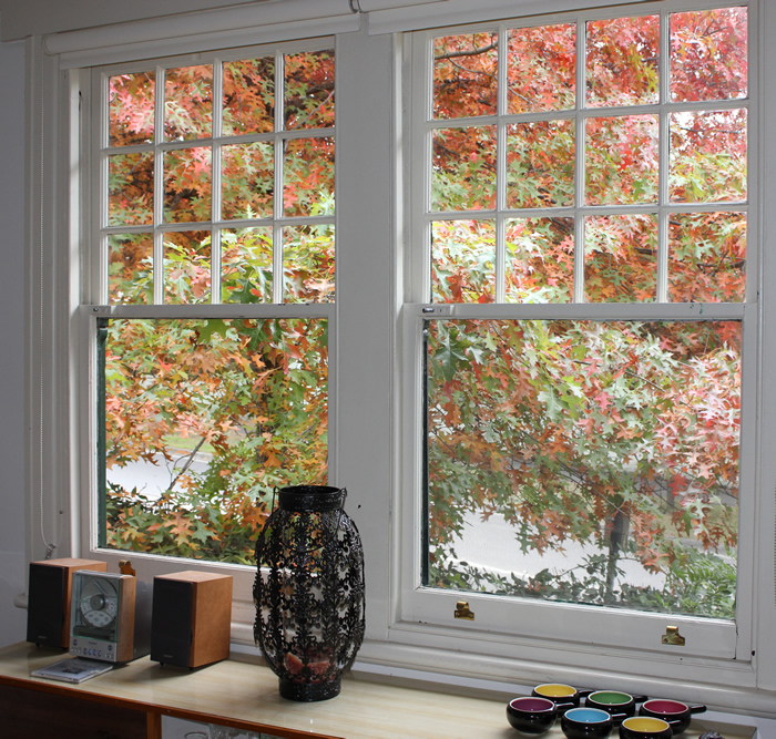 autumn-leaves-on-a-pinoak-outside-my-window.jpg