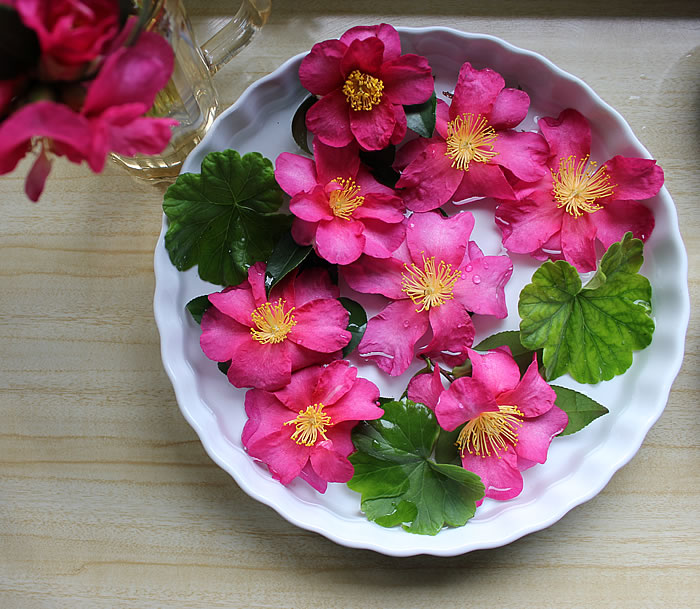 PIE DISH OF CAMELLIAS