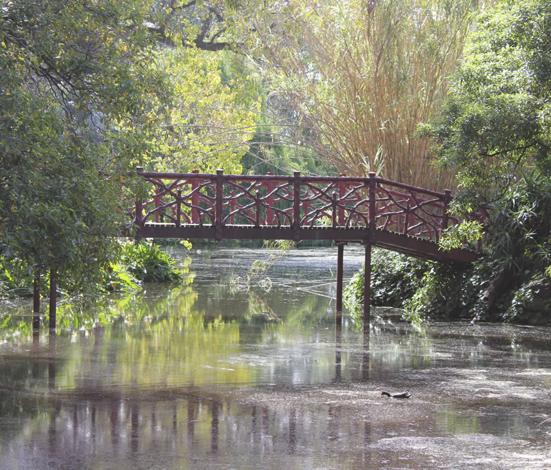 rippon lea estate gardens faux bamboo bridge over waterlillies
