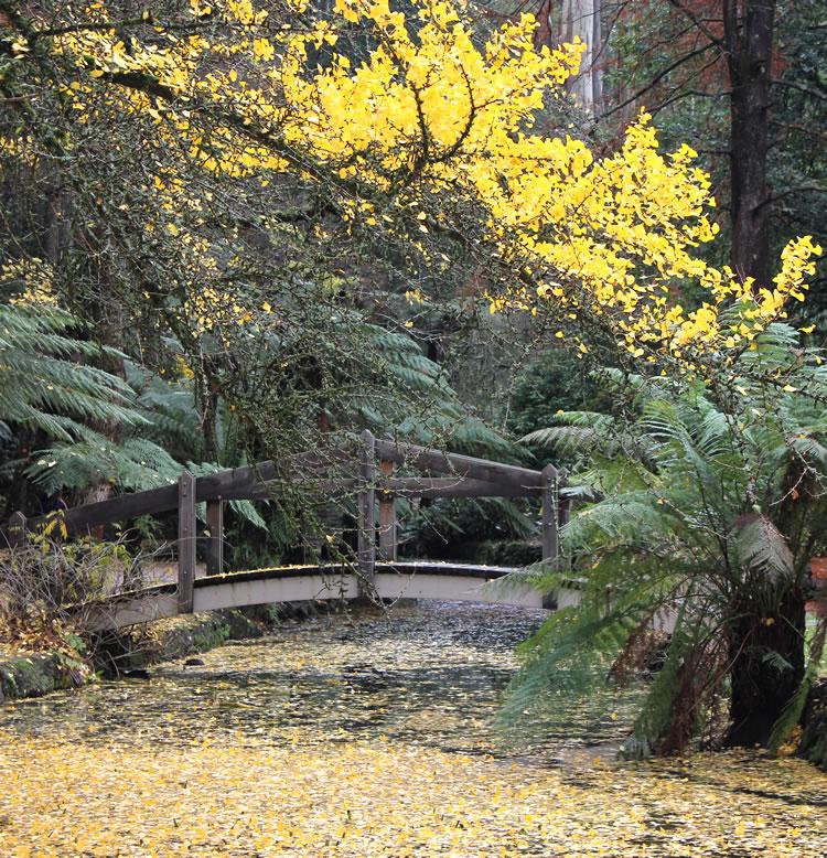 bridge at alfred Nicholas memorial gardens