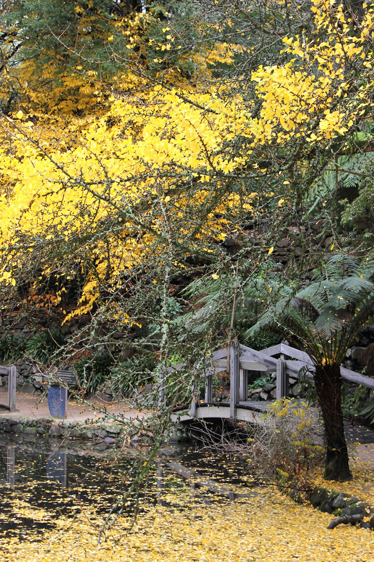 bridge waterlily lake alfred nicholas gardens