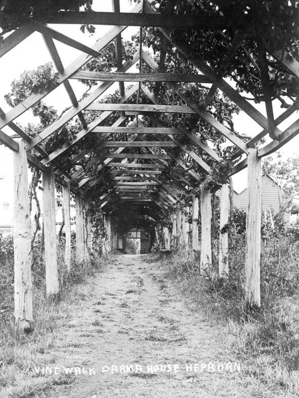 "The famous ""Vine Walk"" built in the 1860s."
