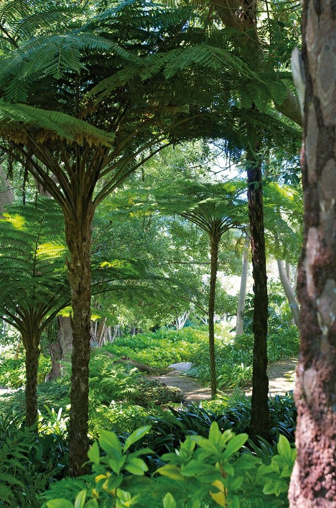 Tree ferns, with their rough bark and huge leaves, are fabulously useful in absorbing sound.