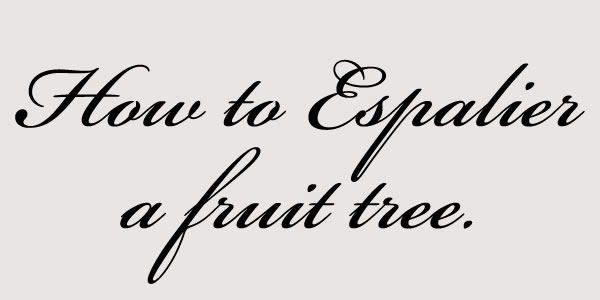 how to espalier.jpg