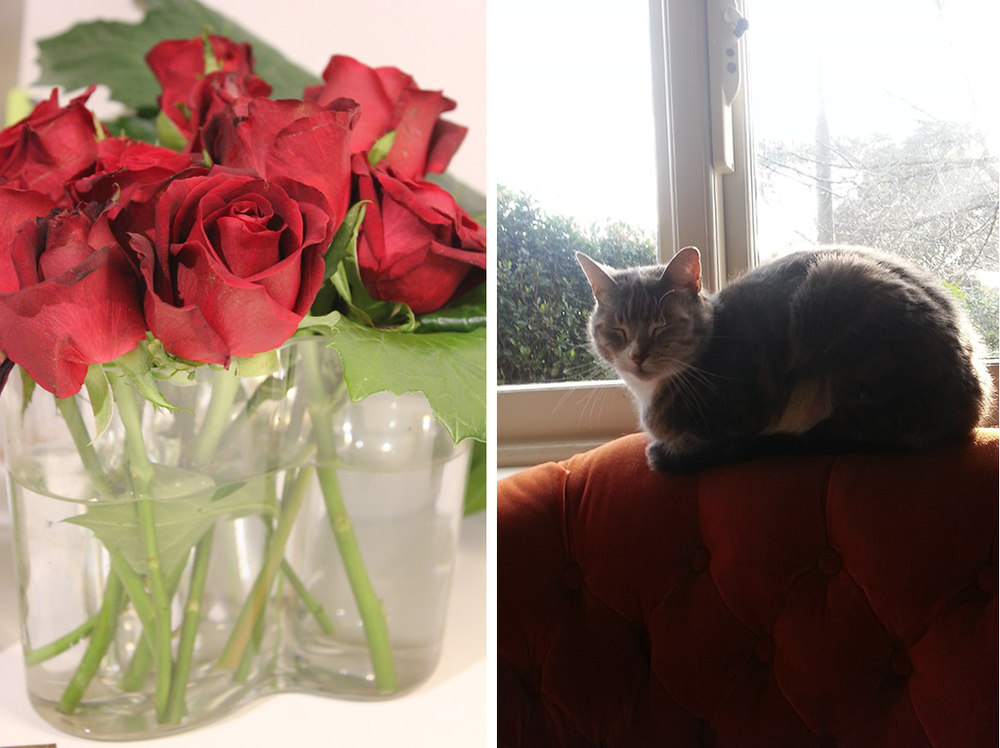 The red roses, with much shorter stems, have now been placed back in the vase…looking a little the worse for wear….