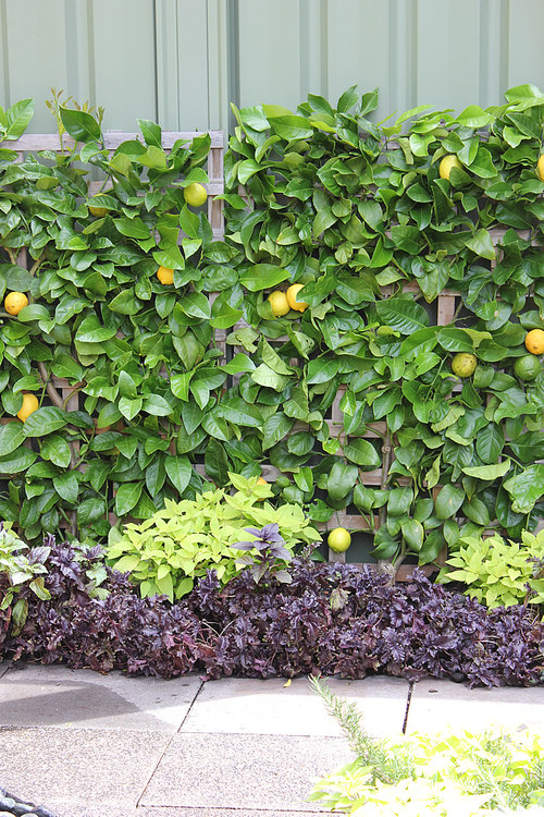 A Persian Carpet Garden with Espalier Lemon + Pomegranate Trees