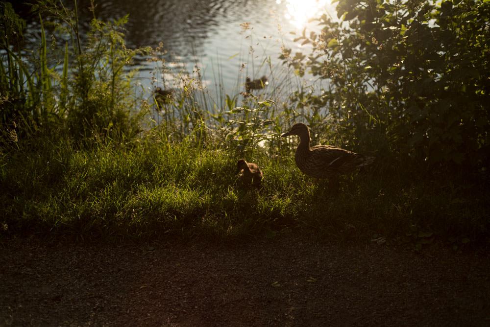 Fotograf-Martin-Bonden--8.jpg