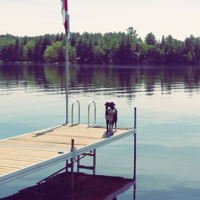 Beautiful cottage weekend ☀️ #lake #cottage #relaxing #dog #pupper #dogsofig #dock #goldenlake #cottageweekend