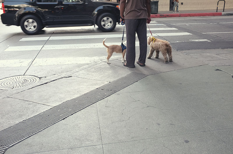 We saw so many people walking their dogs on our  Grand Central Market  adventure.