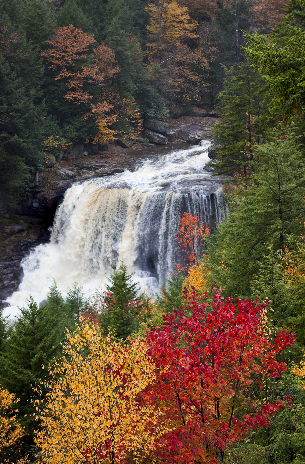 "Mary Ann Honcharik.  ""Blackwater Falls, Fall 2009,"" giclée photographic print, 14.5"" x 21.5"", matted & framed w/ conservation glass as 20"" x 26"".  More work by this artist at Tamarack (Beckley WV) and Buxton & Landstreet Gallery and online at  www.maryannhoncharik-photography.com    FMV   $265      I    GUAR PUR   $331      I    MIN BID$106      I    BID INC$10"