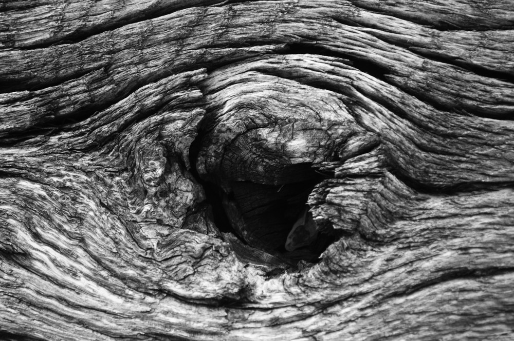 "Gabrielle Branson.  ""Tree Trunk or Elephant Eye,"" digital photographic print.   FMV   $70      I    GUAR PUR   $88       I     MIN BID$30      I    BID INC$5"