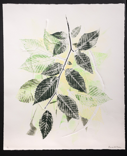 "Bruce Wilson.  ""Summer's Green, No. 2"" monoprint 1/1, Beech botanicals & etching ink w/ embossing, float-mounted with archival materials, framed under museum glass, 22"" x 27"". More work by this artist at WVHighlands Artisans Gallery, Buxton & Landstreet Gallery and online at  www.deerrunstudios.com    FMV   $375      I    GUAR PUR   $469      I    MIN BID$150      I    BID INC$10"