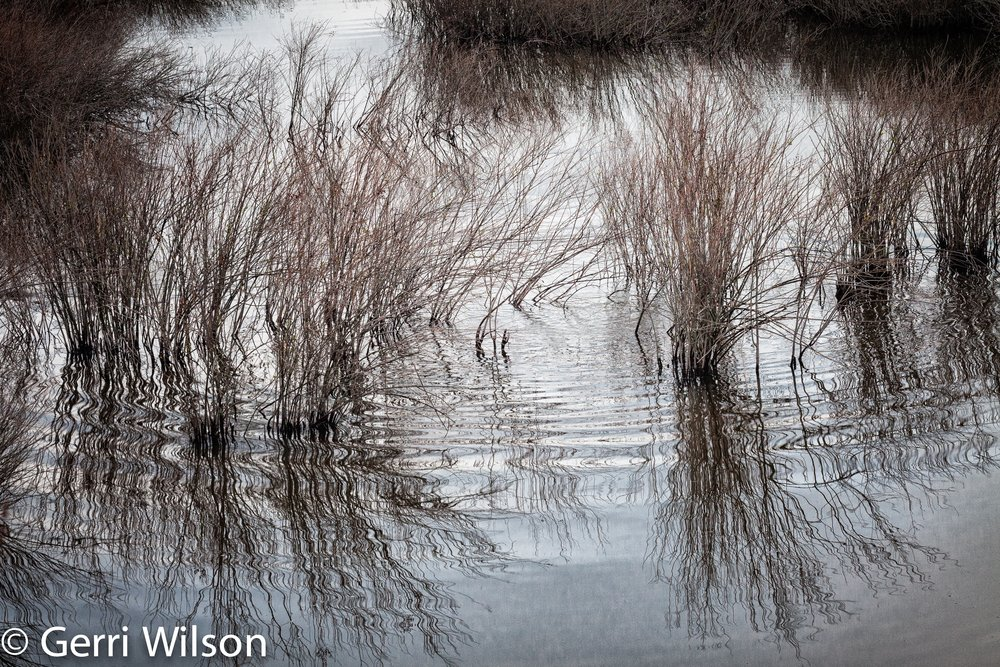 """Beaver's Palette"" by Gerri Wilson Auction Item #147    Digital photographic print, matted, framed under museum glass, 26"" x 20"""