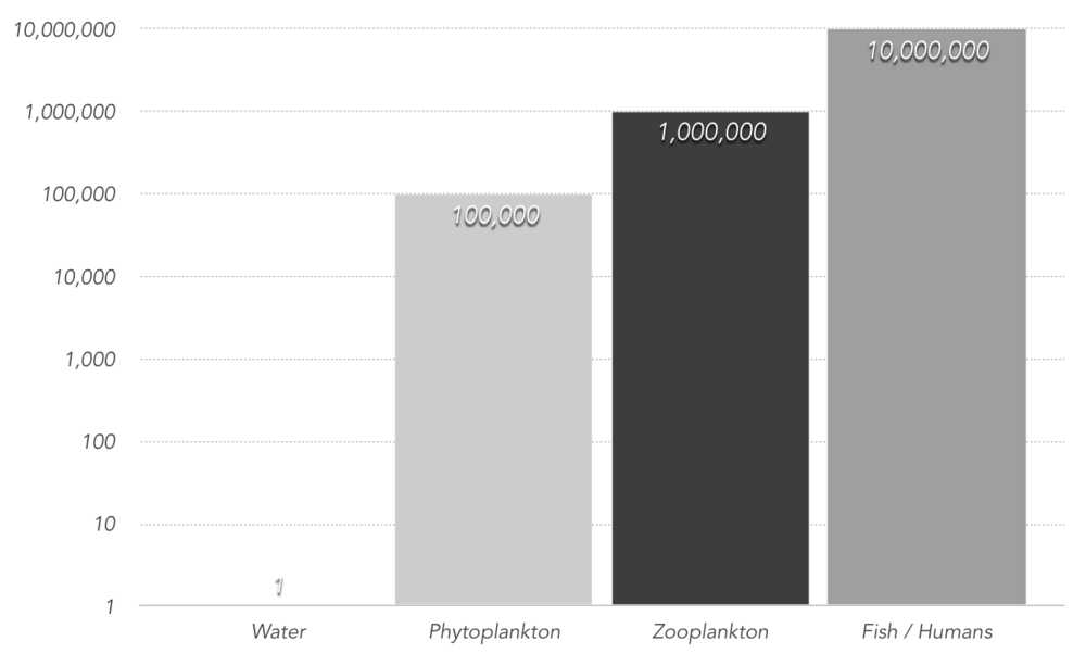 The chart shows the biomagnification of 1 ppm of mercury in water. Mercury is not easily removed from an organism causing it to bioaccumulate, concentrations then increase as the heavy metal is passed through the food chain.                (Environment Canada website)
