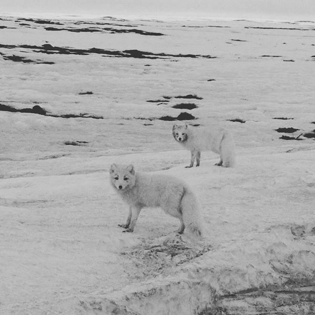 Made some new friends in Nunavut