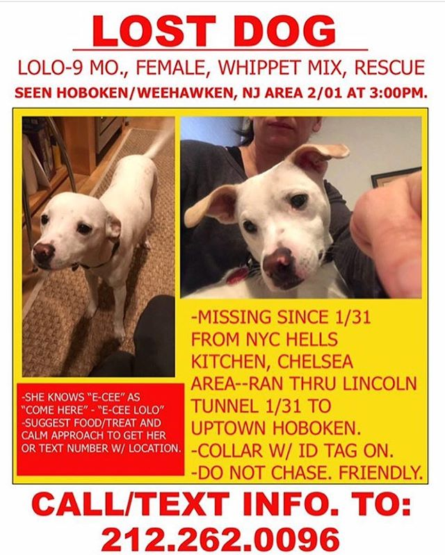 Please spread the word. Lost nine month old puppy. Made its way through the Lincoln Tunnel.