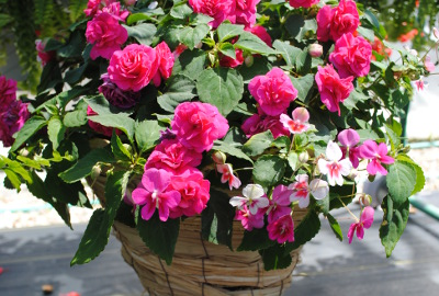 hanging-baskets.jpg