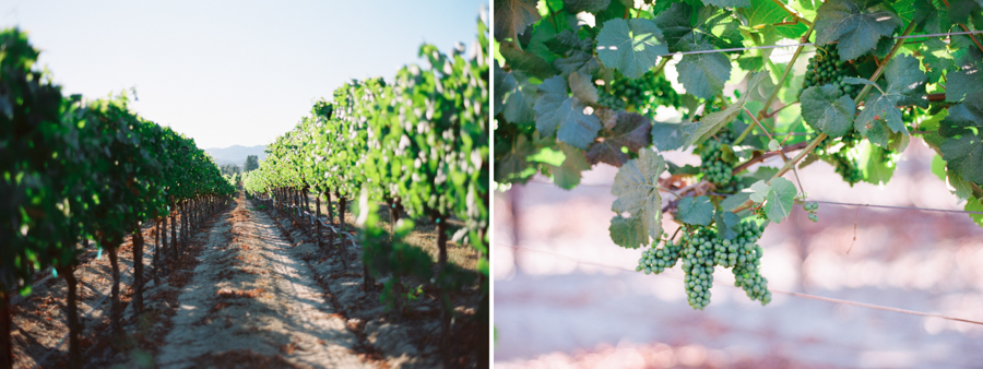 Vineyard California Wedding by Jessica Garmon