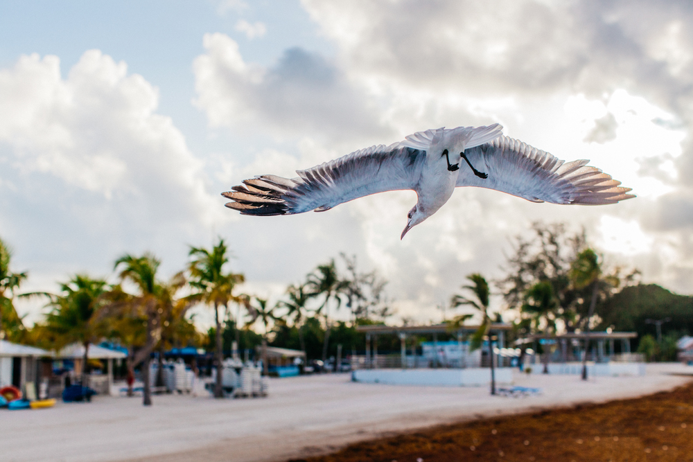 I really wish I could claim credit to this photo but my boyfriend got this shot just as a seagull was passing right by us. I did all the post editing though lol!