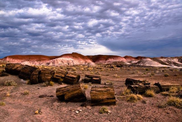 PETRIFIED FOREST NATIONAL PARK   ARIZONA, USA