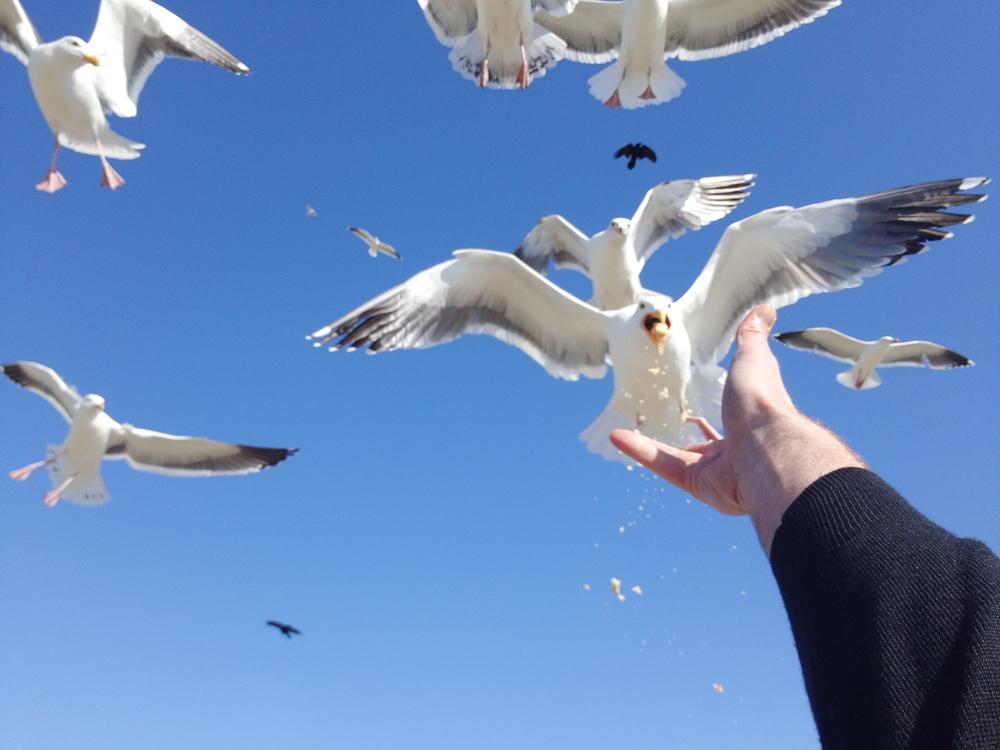 seagull_hand.jpg