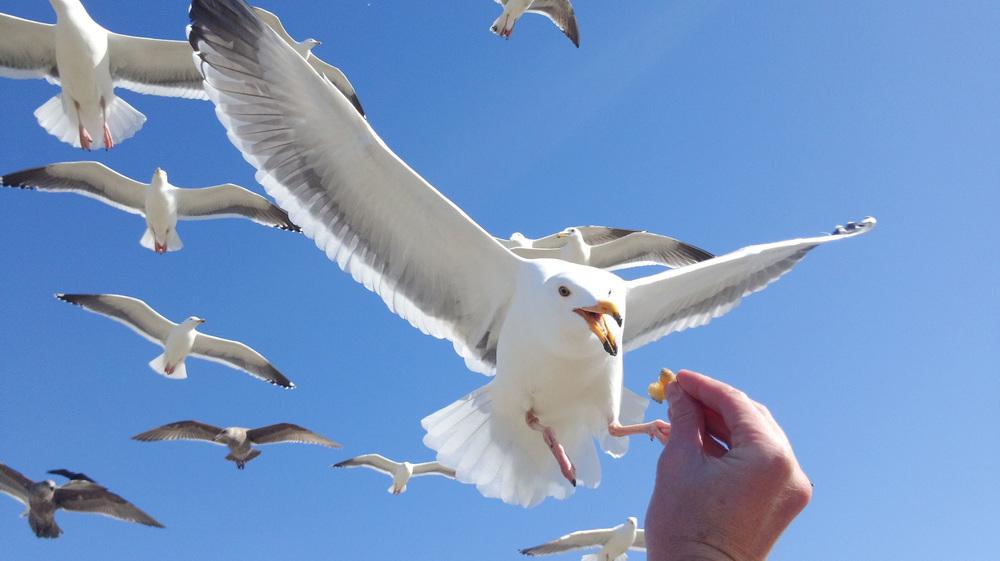 tech-bird.jpg