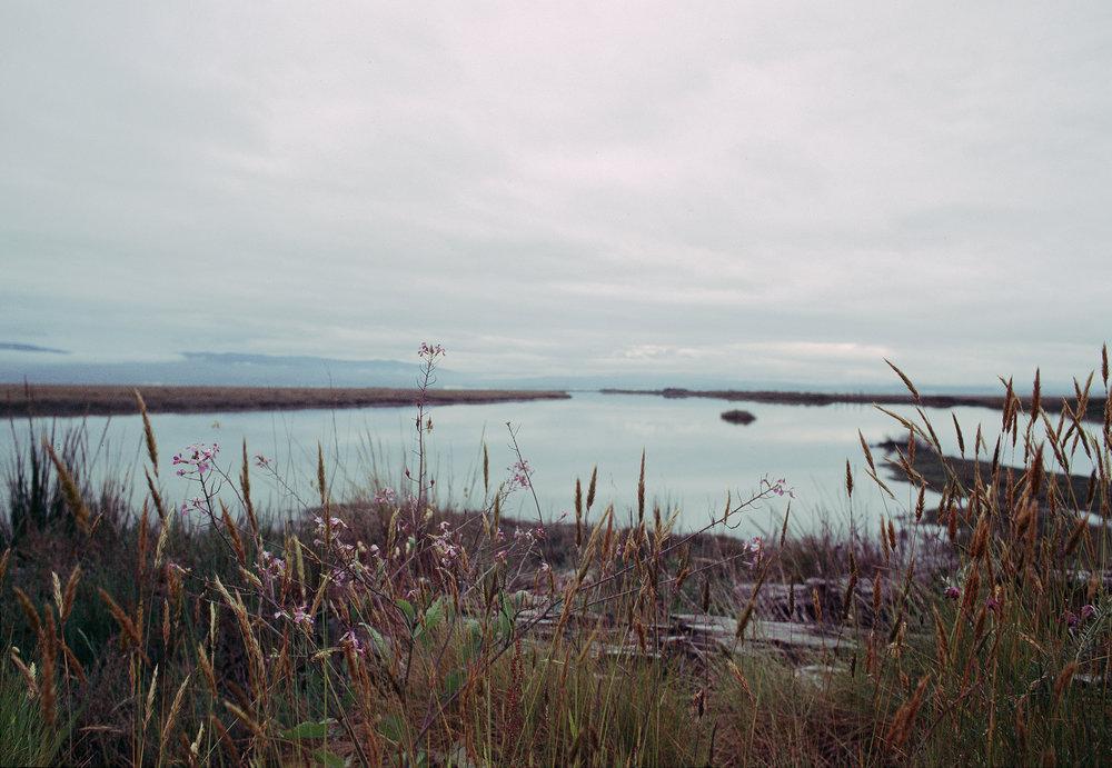 arcata bay, ca