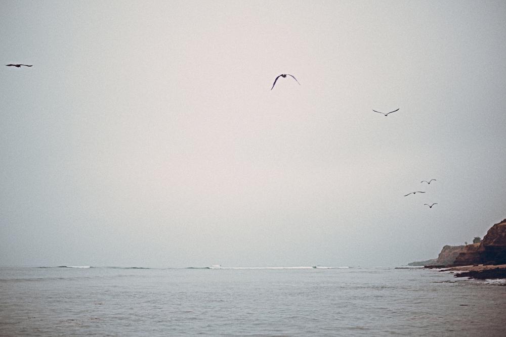 150619 low tide-7278.jpg