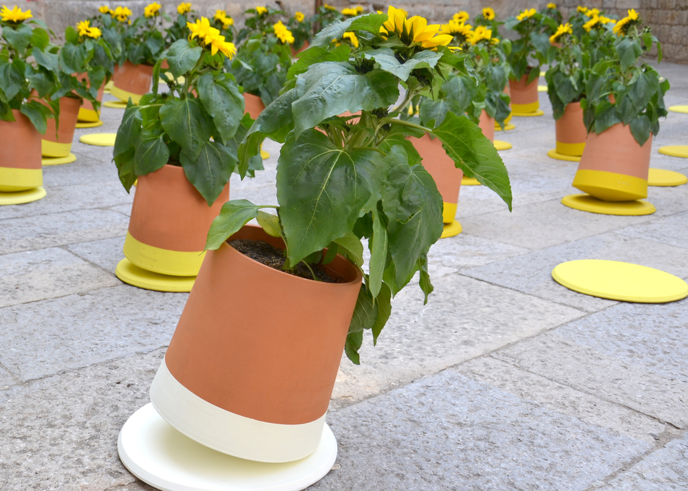 BAG disseny livingthings voltasol temps de flors 02.JPG