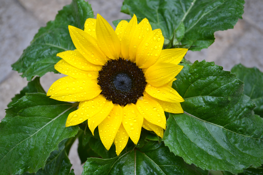 BAG disseny livingthings voltasol temps de flors 04.JPG