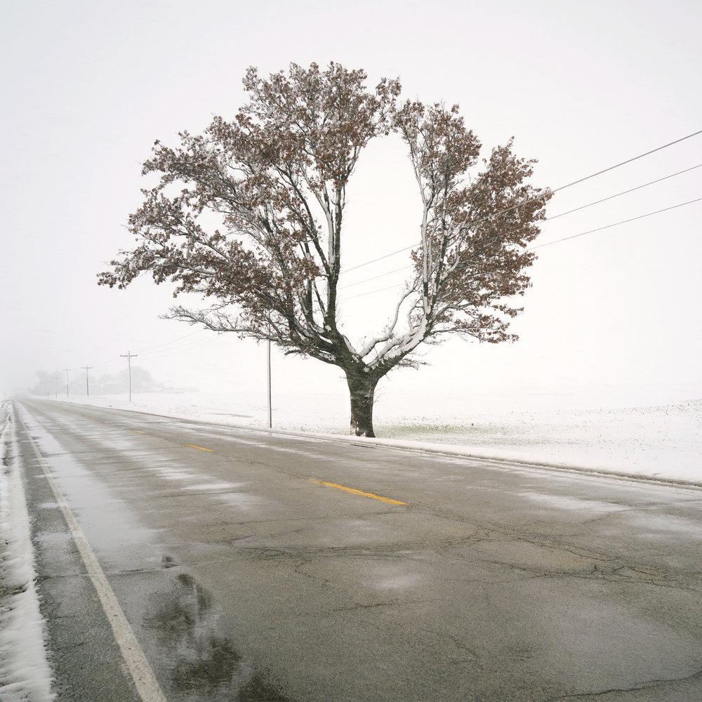 Indiana Lines and Split Tree.jpg