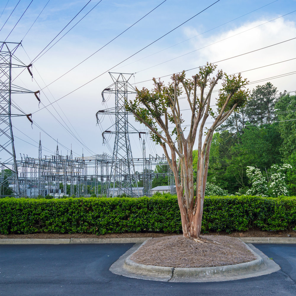 Raleigh Substation and Bare Tree.jpg