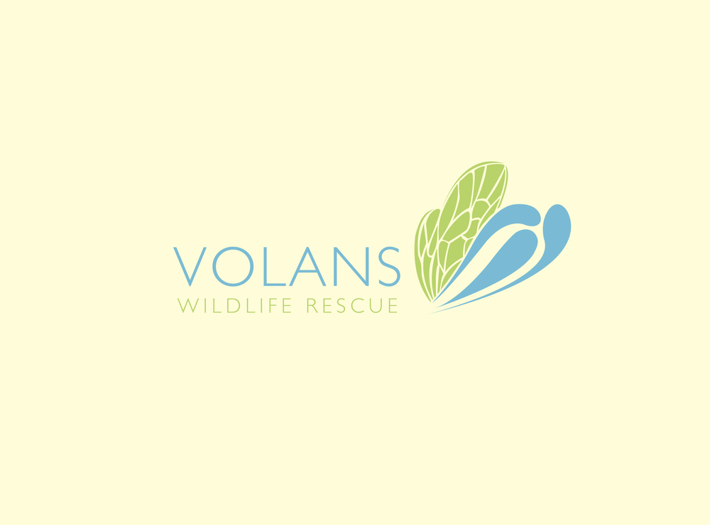 volans logo copy.jpg