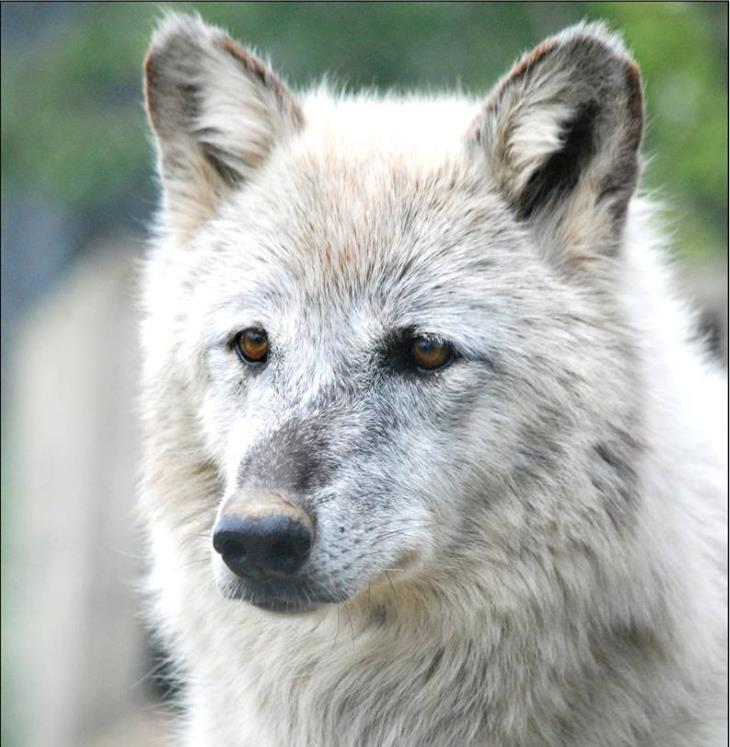 Jelly is the oldest at 15 years old, but she doesn't look a day over 5. We caught her running around her pen like a rascally pup.Her somewhat aggressive nature has landed her her own bachelorette pad, but she doesn't mind being the lone wolf.