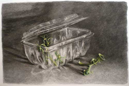 Tomato Stalks and a Plastic Box - charcoal and pastel drawing