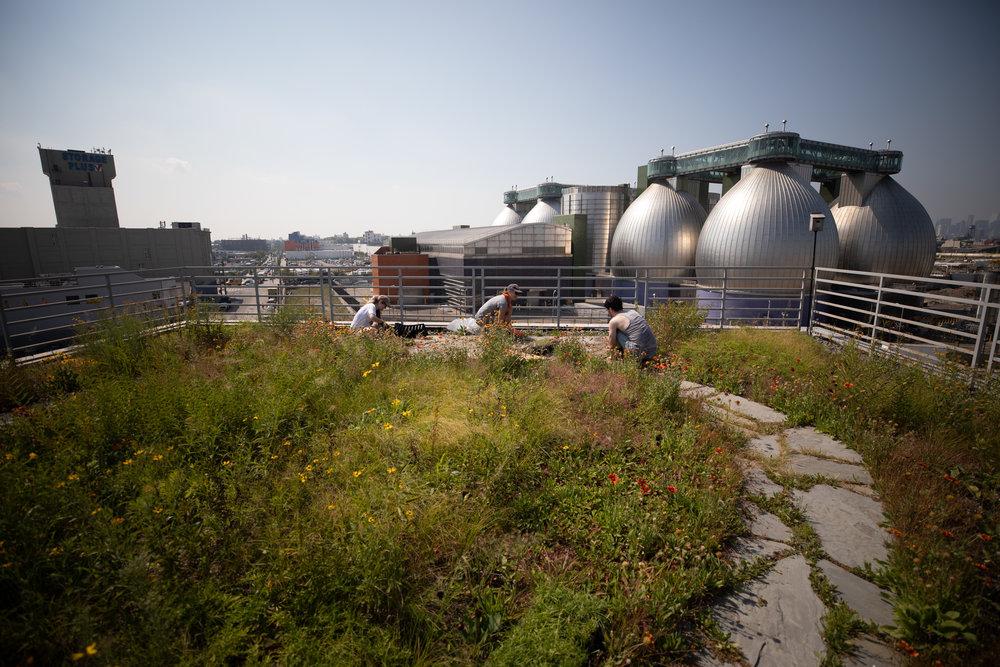 photo of kingsland wildflower rooftop
