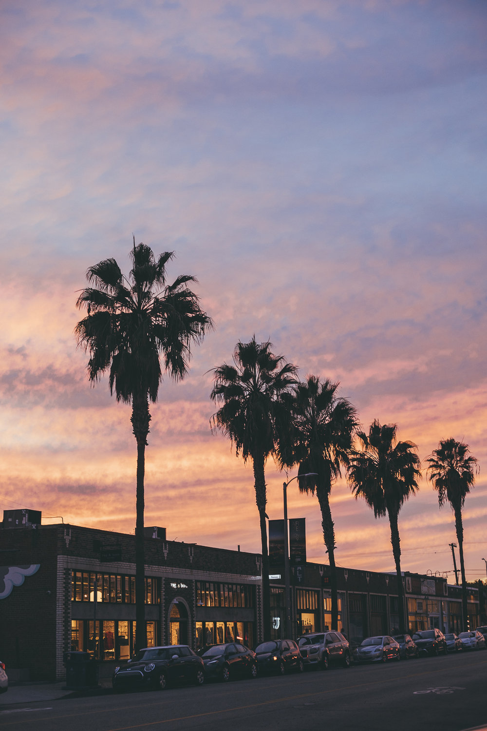 Abbott Kinney Sunset Palm Trees Venice Beach Photography / Canon 5D Mark IV / kelly creative