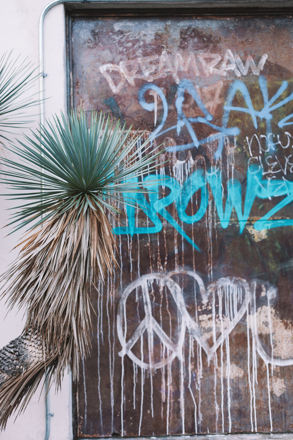 Graffiti / Palm Tree / Venice Beach / Travel Photography / Kelly Fiance Creative