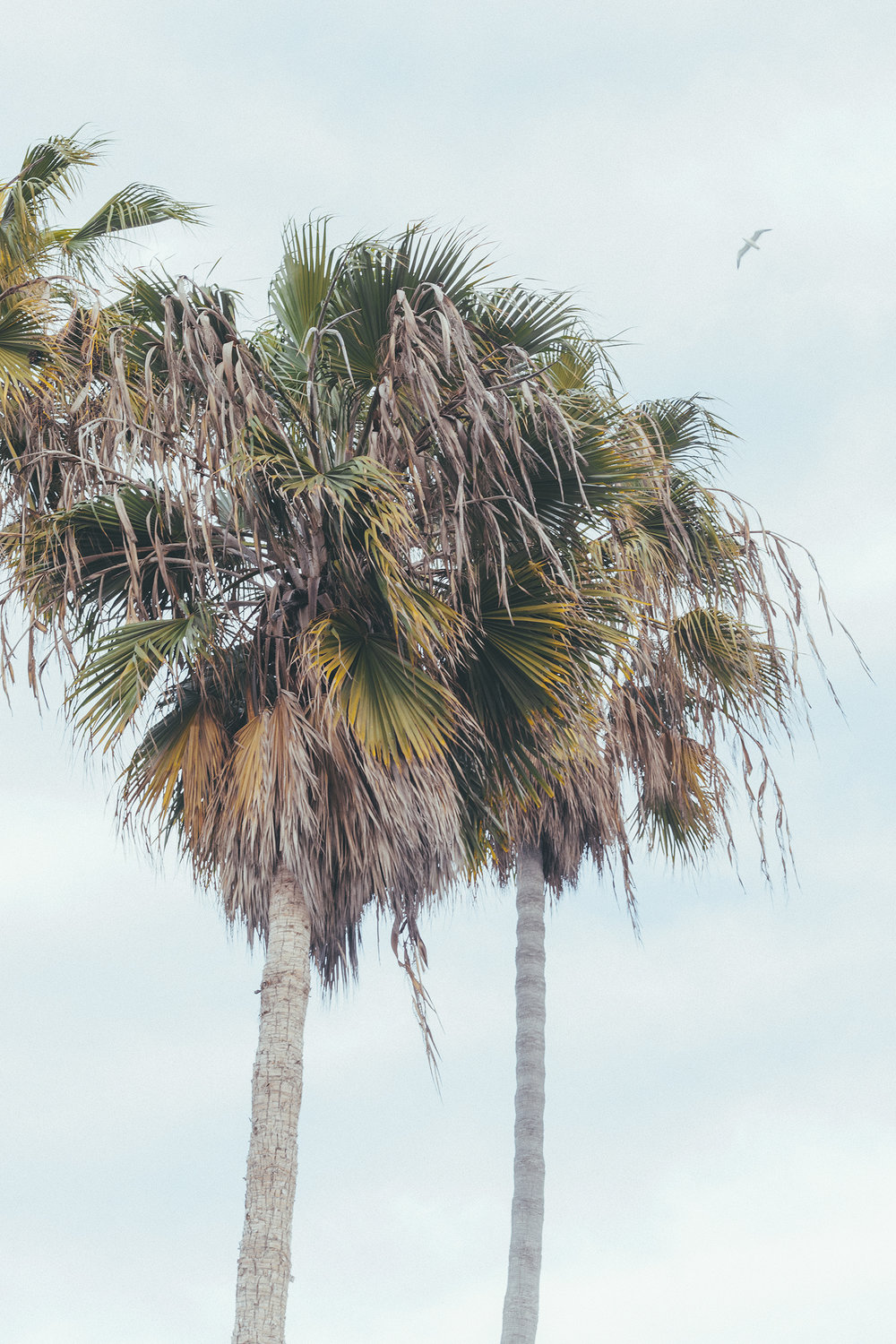 Palm Trees / Nature Photography / Venice Beach Travel / Kelly Fiance Creative
