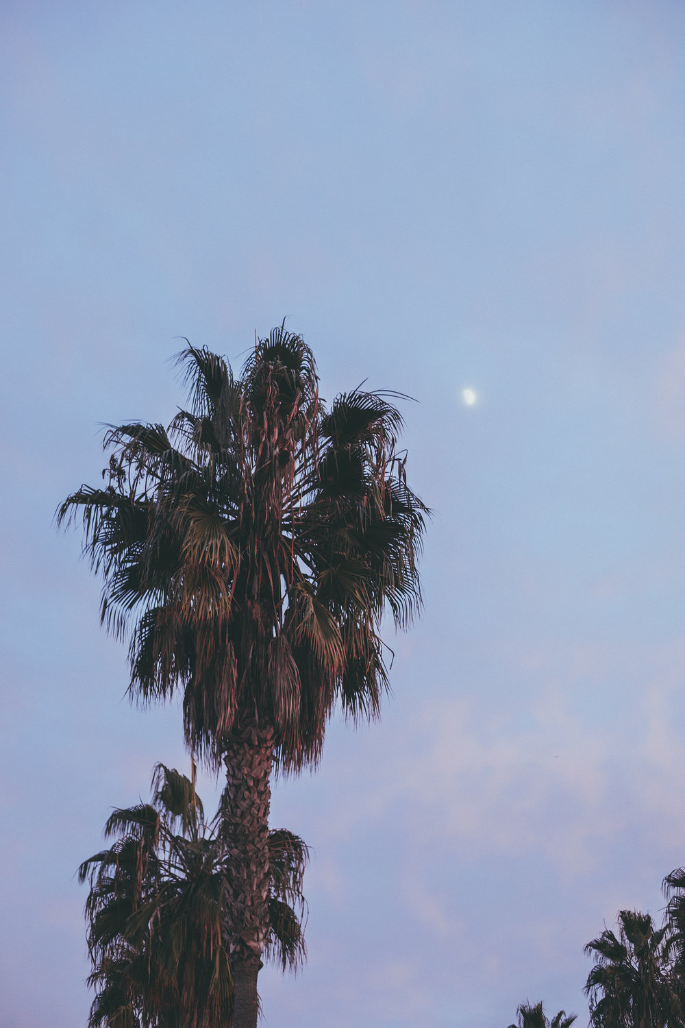 Palm Tree Sunset / Abbott Kinney / Nature Photography / Venice Beach Travel / Kelly Fiance Creative