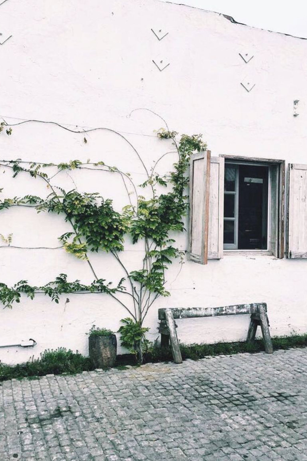 Outdoor Patio / Vines Growing on Wall / Rustic Storefront / Kelly Fiance Creative