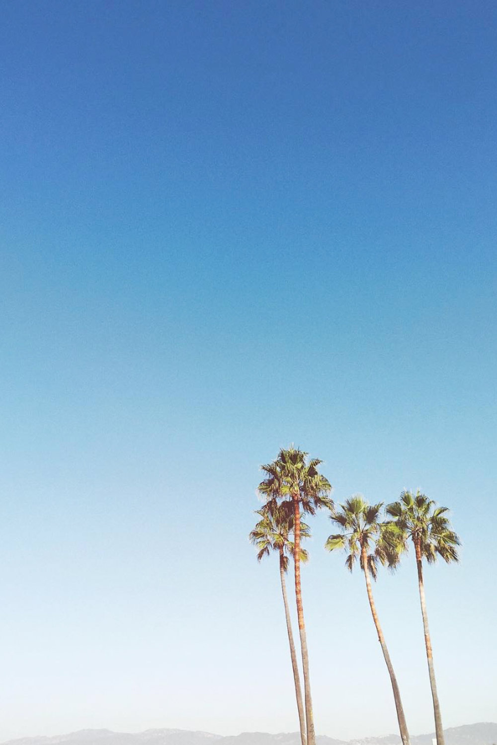 Palm Trees / Abbott Kinney / Nature Photography / Venice Beach Travel / Kelly Fiance Creative